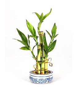 Feng shui chi create positive energy in your environment